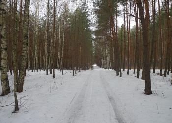 zima4_0